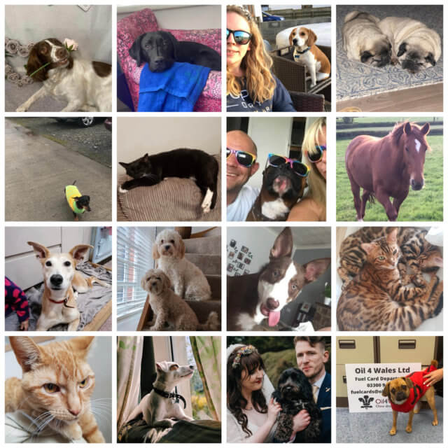 April 2021 – National Pet Month