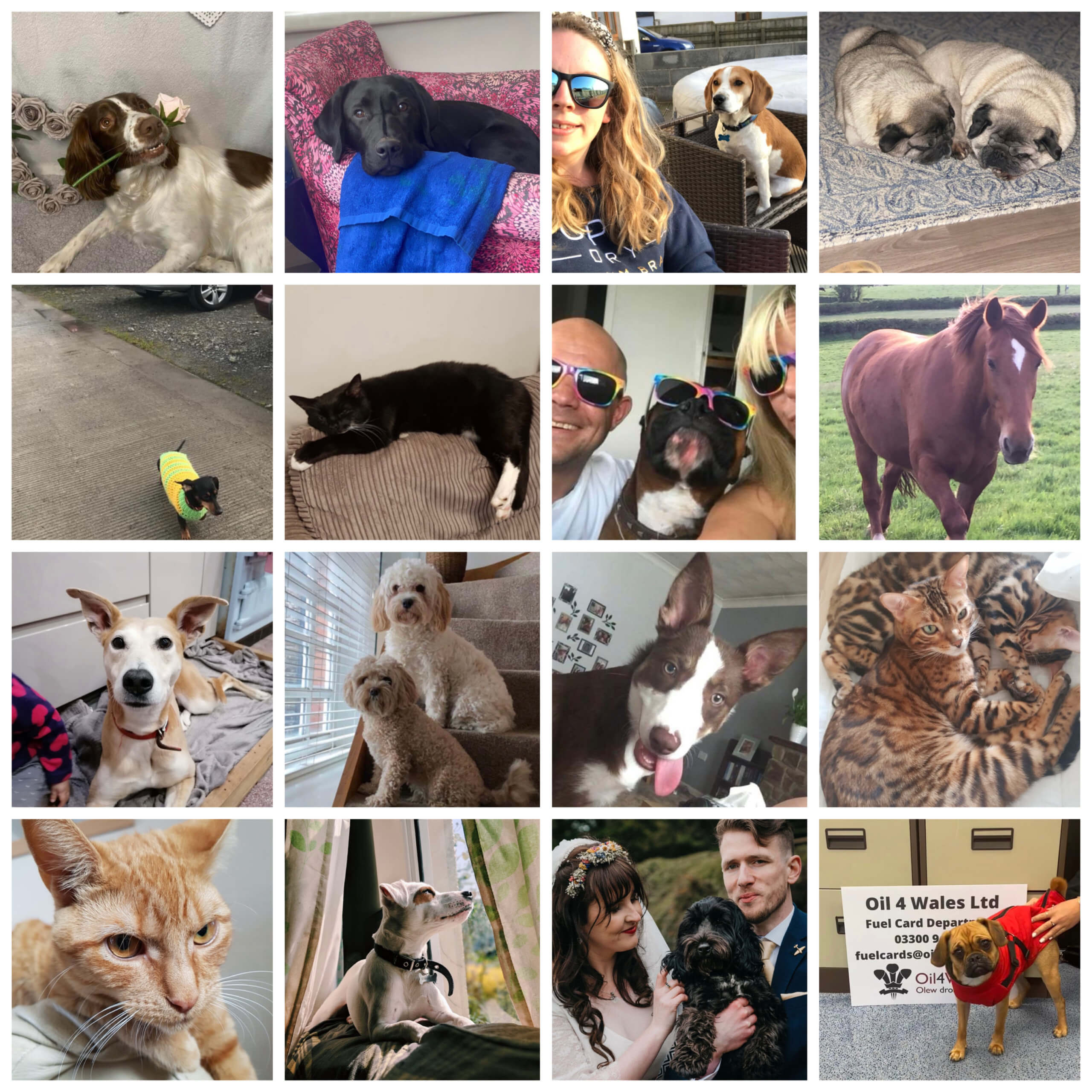 sixteen pictures of our pets